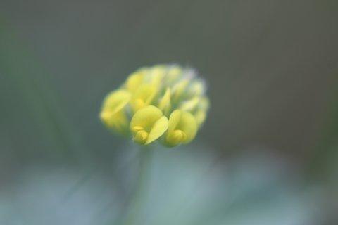 FOTKA - Zahr�dka - �erven XI. - pidi kv�tek v tr�v�