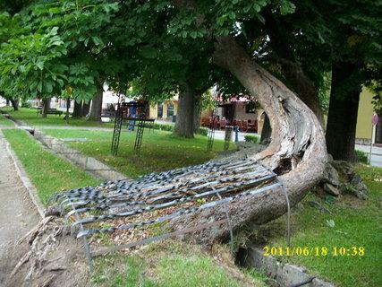 FOTKA - Záchrana stromu
