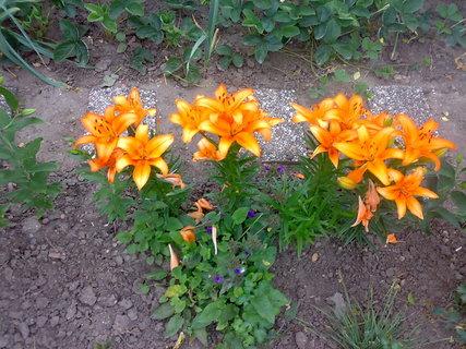 FOTKA - Oranžova kytička