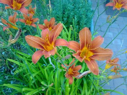 FOTKA - U rodiču na zahradce