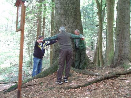 FOTKA - Památný strom - smrk u zámečku