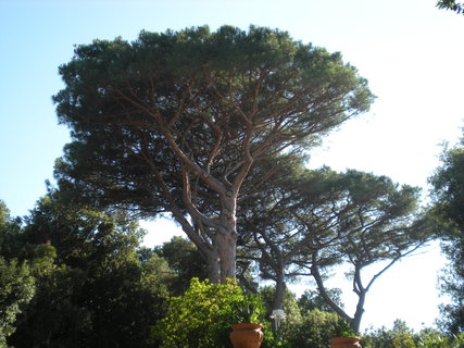 FOTKA - borovice jeste jednou