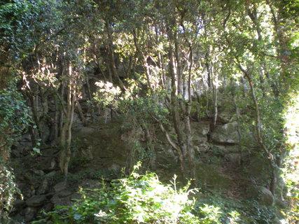 FOTKA - zacarovanej les