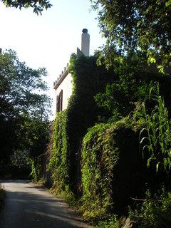 FOTKA - domek porostly zeleni
