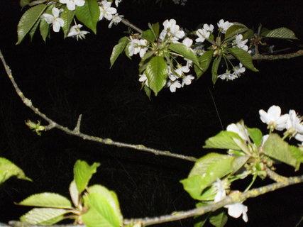 FOTKA - květy v noci