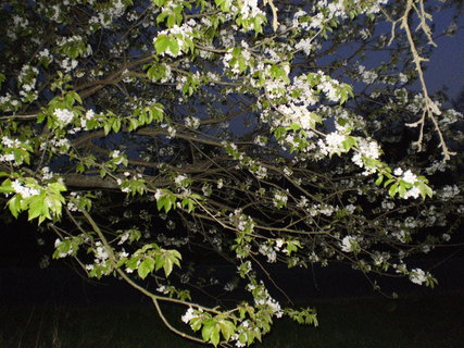 FOTKA - květy v noci .