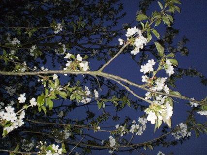 FOTKA - květy v noci ..