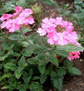 FOTKA - Růžové kytičky*