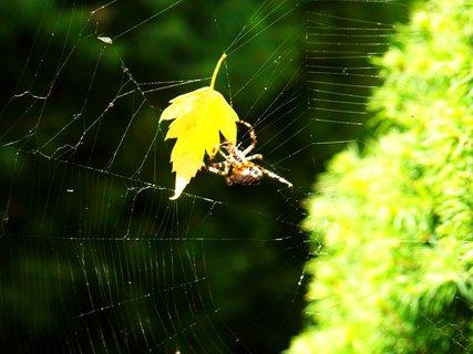 FOTKA - ??? pavouk vegetarián... ;-)