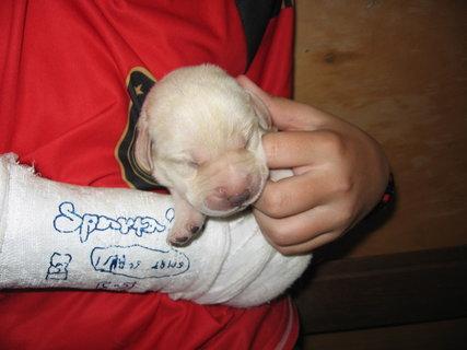 FOTKA - slepé štěně