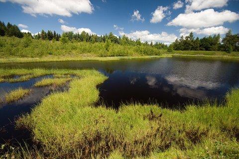 FOTKA - Volárenský rybník...