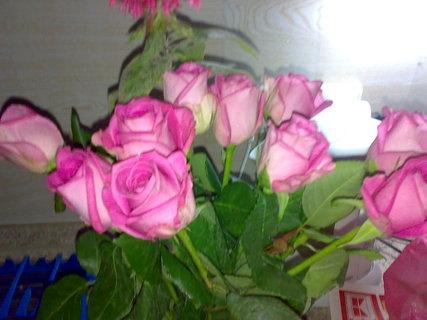 FOTKA - Ruže :))