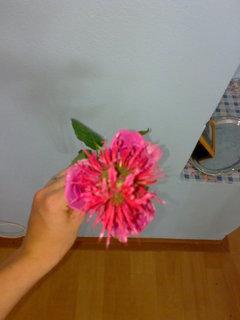 FOTKA - Pro pani učitelku Lucku