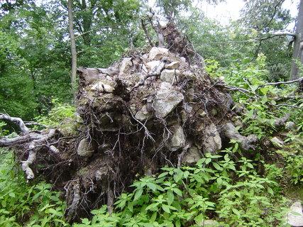 FOTKA - vyvrácený strom