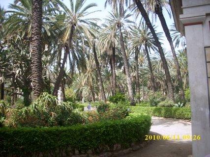 FOTKA - Palermo - Palmová zahrada