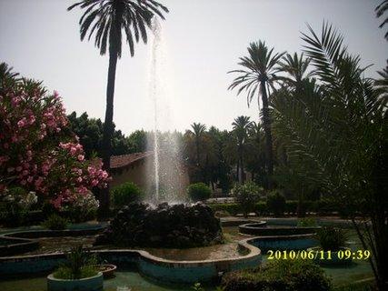 FOTKA - Palermo - Palmová zahrada*