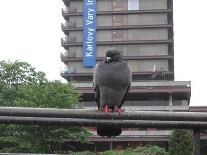FOTKA - Dobří holubi neodlétají
