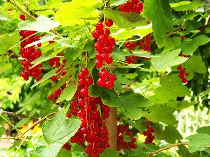 FOTKA - procházka 9.7.2011, červená se..