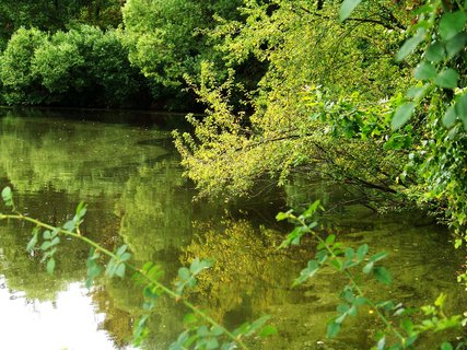 FOTKA - procházka 9.7.2011, u Hornomlýnského rybníka