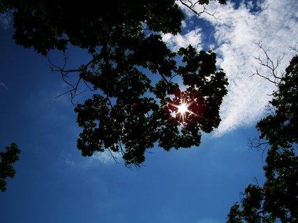 FOTKA - vyjížďka na kole 10.7.2011, slunce ve větvích..