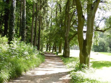 FOTKA - cesta parkem a staré stromy