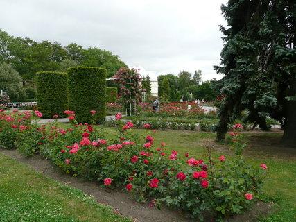 FOTKA - Praha - Růžová zahrada na Petříně