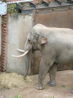 FOTKA - Praha - Zoo - slon