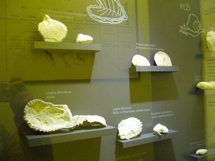 FOTKA - Polabské muzeum,,,,,