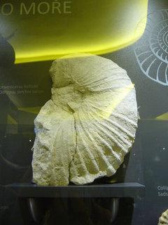 FOTKA - Polabské muzeum,,,,,,
