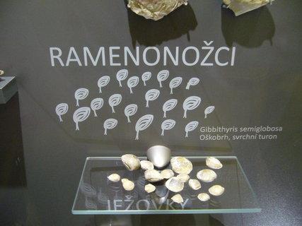 FOTKA - Polabské muzeum,,,,,,,,