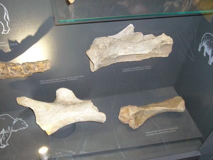FOTKA - Polabské muzeum,,,,,,,,,