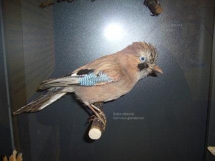 FOTKA - Polabské muzeum,,,,,,,,,,,,,,,,,,