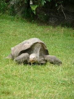 FOTKA - Praha - Zoo - želva sloní.