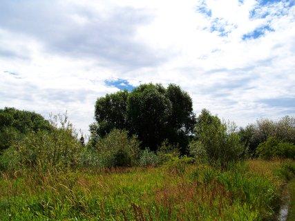 FOTKA - léto všude kolem, krajina u rybníka