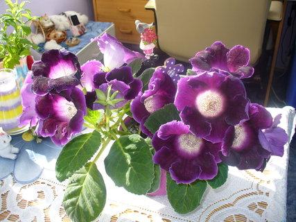 FOTKA - Těch květů bylo nakonec dvacet čtyři