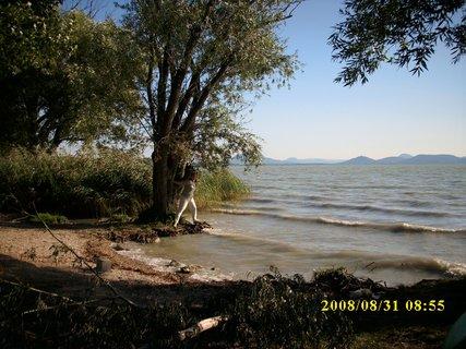 FOTKA - 2008cestou z Chorvatska - Balaton