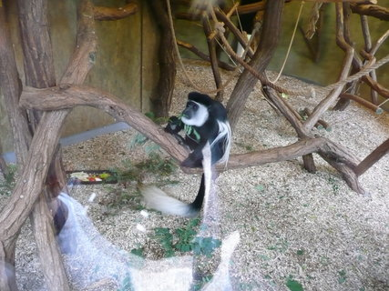 FOTKA - Praha - Zoo - opička