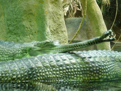 FOTKA - Praha - Zoo - krokodýli,