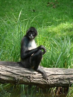 "FOTKA - Praha - Zoo - opice"""