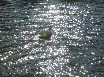 FOTKA - Kouzlo vody a slunce