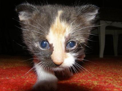 FOTKA - kočička Mína
