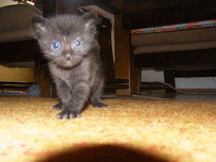 FOTKA - kočička Matylda