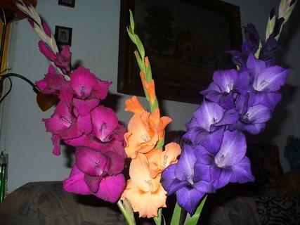 FOTKA - Ze zahrádky do vázy