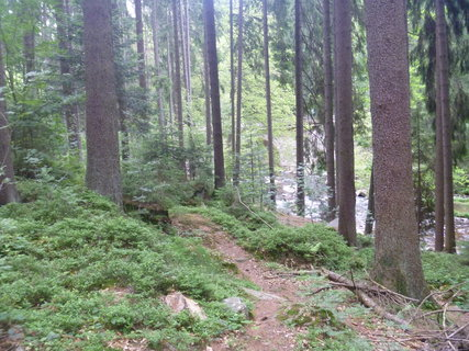 FOTKA - V lese 3
