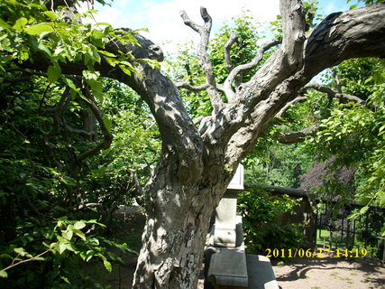 FOTKA - Starý strom 1