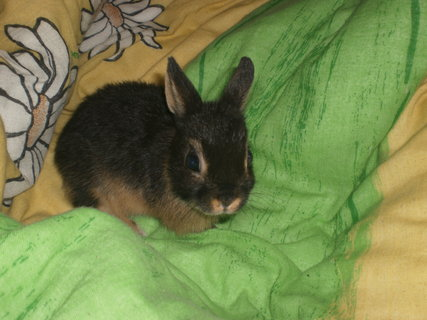 FOTKA - Eliška naše nová králičí slečna