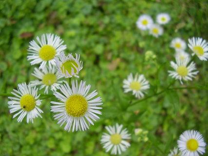 FOTKA - květinky   ..