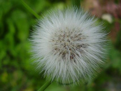 FOTKA - květinky   ...