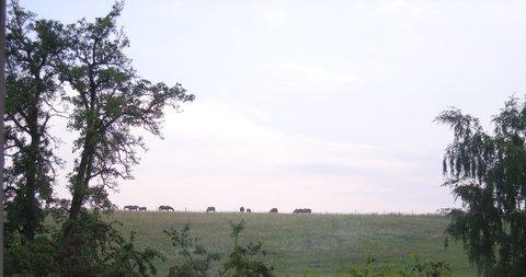 FOTKA - raní pohoda na pastvě