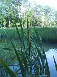 FOTKA - doutník na břehu rybníka